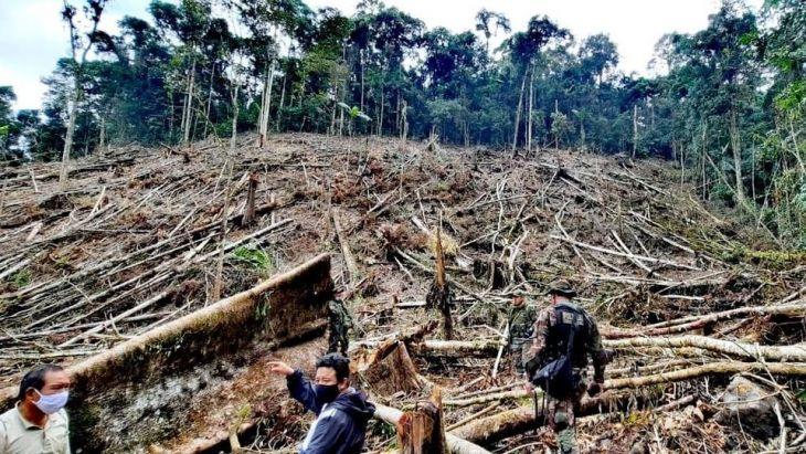 Fiscalía Ambiental de Moyobamba constató deforestación de cuatro hectáreas de árboles en Bosque de Protección Alto Mayo