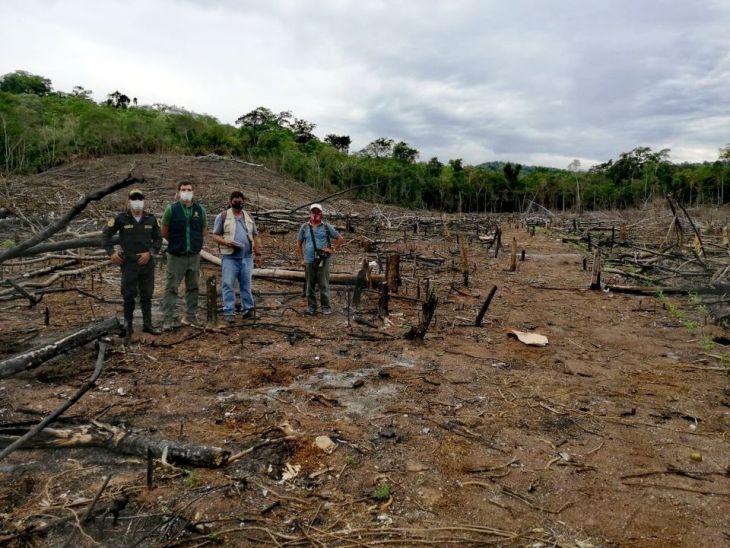 Fiscalía Ambiental de Juanjuí constató tala y quema de seis hectáreas de bosque en Bellavista