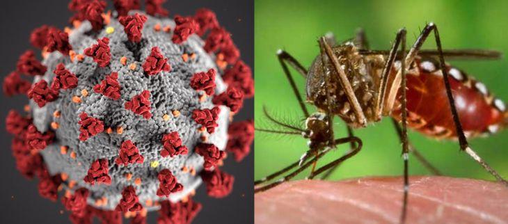 En Tarapoto se están encontrando casos de pacientes con dengue y Covid 19 al mismo tiempo