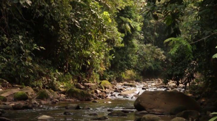 Especialista en Certificación Ambiental considera que la carretera Yurimaguas – Balsapuerto – Moyobamba, es estrictamente política y no técnica
