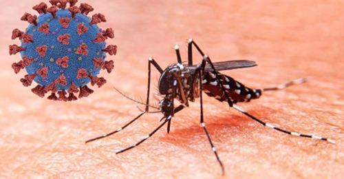 Coronadengue: Algunos pacientes con dengue, también tienen covid-19