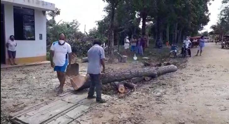 MPSM autoriza la tala de un árbol de la especie Cedro, según denuncian vecinos del barrio Las Lomas de San Pedro