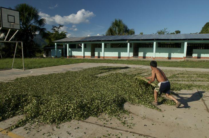 Neil Marina: Elaboraremos un plan de intervención en el Bajo Huallaga para frenar el avance del cultivo de la hoja de coca