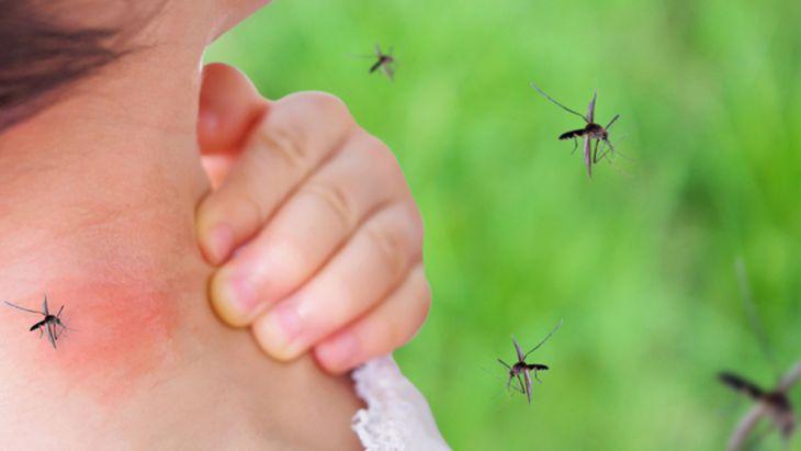 Casos de dengue va en aumento en Tarapoto y alrededores
