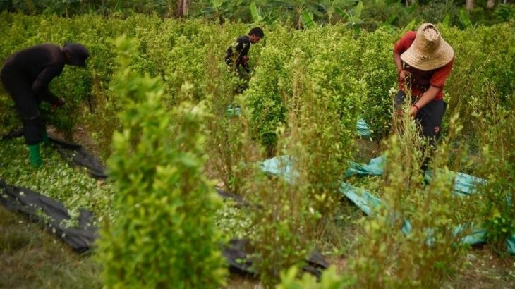 Según la Oficina de Política Nacional de Control de Drogas de los Estados Unidos, Perú alcanzó récord histórico de 88,200 hectáreas de coca en 2020