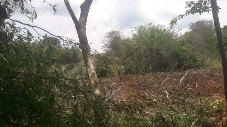 Juan Guerra: Comisión saldrá a realizar la verificación de trabajos de deforestación en un sector Totorillaico